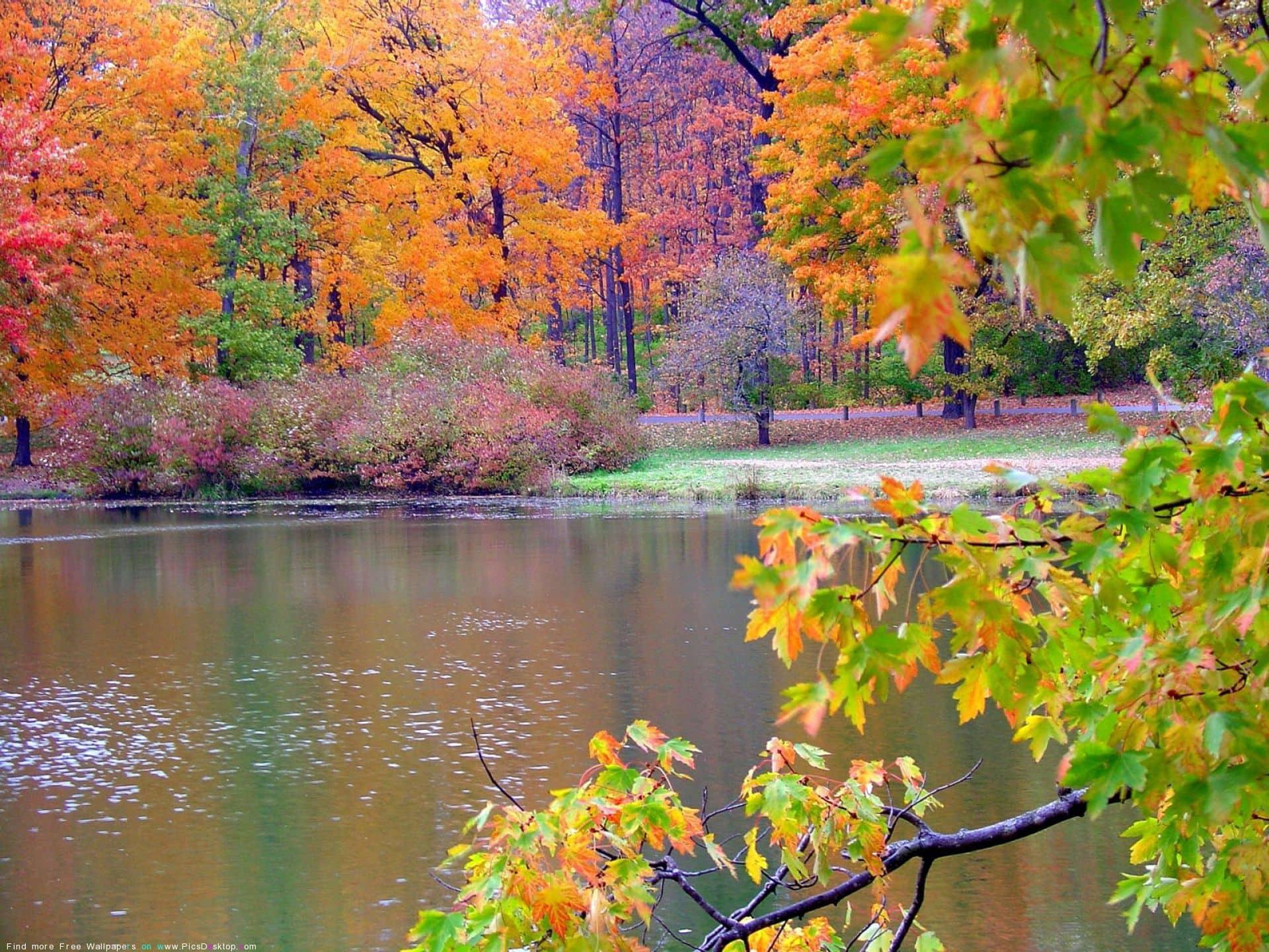 nature themes on Pinterest