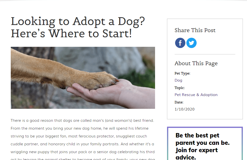 Pointers While Adopting A Pet
